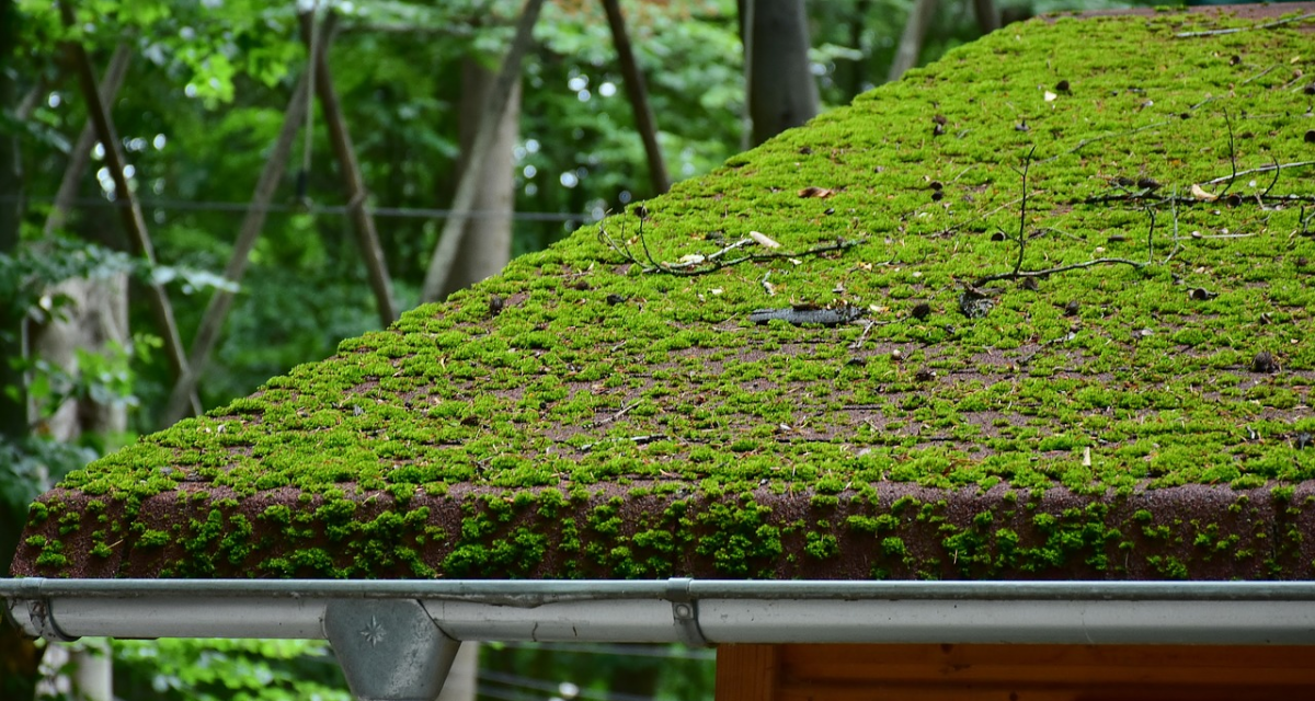 Mousse sur la toiture : comment la traiter ?